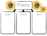 All About Plants: Graphic Organizer