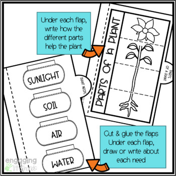 All About Plants Interactive Flipbook