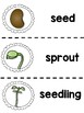 Plants - All About Plants! Life Cycle, Plant Needs  & More!