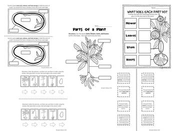 all about plants packet worksheets and writing for the life cycle plant parts. Black Bedroom Furniture Sets. Home Design Ideas