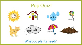 All About Plants (Powerpoint)