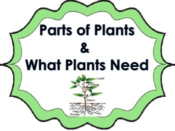 All About Plants Science Activity for Whole Group or Science Stations