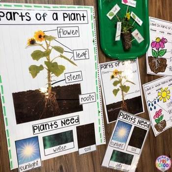 All About Plants - Science for Little Learners (preschool, pre-k, & kinder)