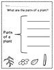 All About Plants Unit!