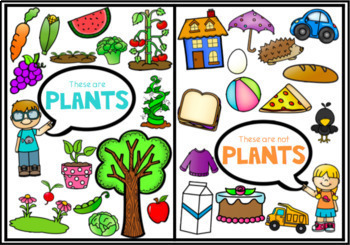 All About Plants for Kindergarten and Year 1
