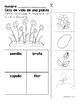 All About Plants in Spanish! Spring Freebie!