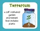 All About Plants {lesson plans and activities}
