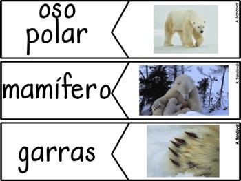 All About Polar Bears- Non Fiction Unit in Spanish Osos polares