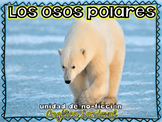 All About Polar Bears- Non Fiction Unit in Spanish Osos polares