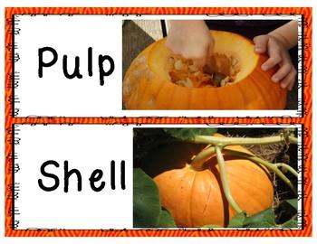 All About Pumpkins!