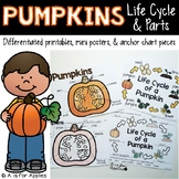 All About Pumpkins! {Life Cycle, Pumpkin Parts}