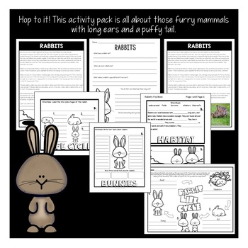 Easter Activities: All About Rabbits |Life cycle of a Rabbit |