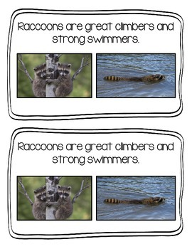 All About Raccoons Emergent Reader