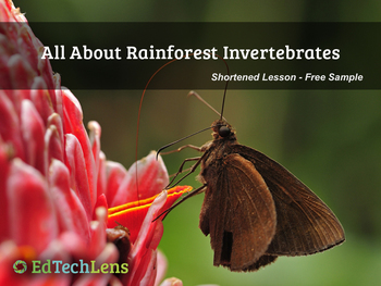 All About Rainforest Invertebrates PDF - Free Sample