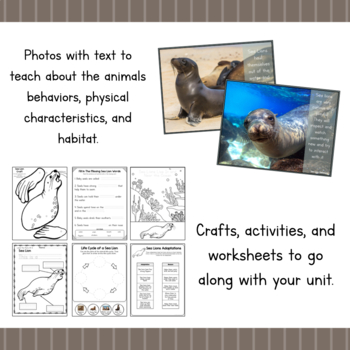 All About Sea Lions- Animal Science