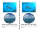 All About Sharks Nonfiction Resources