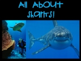 All About Sharks PPT