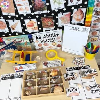 All About Shells- Science for Little Learners (preschool, pre-k, & kinder)