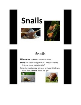 All About Snails PowerPoint Presentation