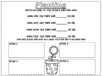 All About Soil- A Science Investigation