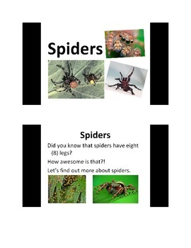 All About Spiders PowerPoint Presentation