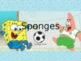 All About Sponges