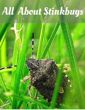 All About Stinkbugs Pack