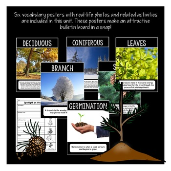 All About Trees: Deciduous and Coniferous | Life Cycle of a Tree