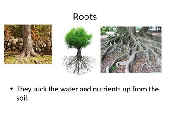 All About Trees PP