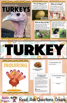 All About Turkeys Nonfiction Unit