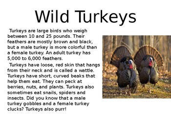 All About Turkeys Text Evidence