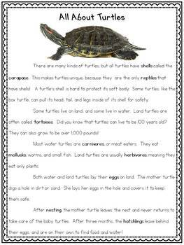 All About Turtles Science Unit