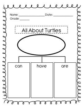 All About Turtles Worksheet