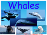 All About Whales: Facts, Videos, and Fun!