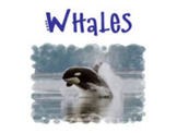 All About Whales PowerPoint