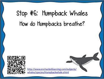 Whales QR Code Web Quest
