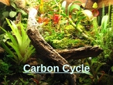 All About the Carbon Cycle