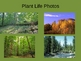 All About the Deciduous Forest