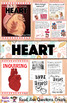 All About the Human Heart