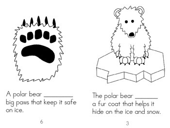 All About the Polar Bear