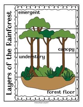 Rainforest Bundle - Lesson Plans and Activities