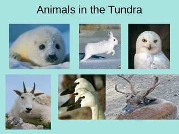 All About the Tundra