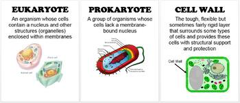 All Biology Word Walls