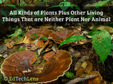 Plants And Other Living Things That are Neither Plant Nor Animal PDF