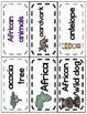 All about African Animals Word Wall Picture cards
