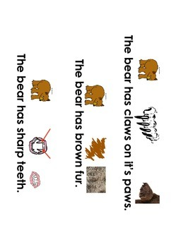 All about Bears ( Goldilocks & the 3 bears)