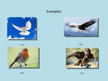 All about Birds! Animal Classification