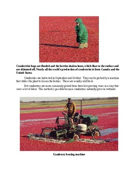 All about Cranberries