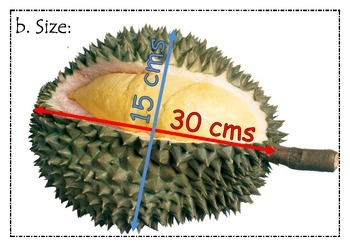 All about DURIAN