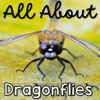 All about Dragonflies Life Cycle and More